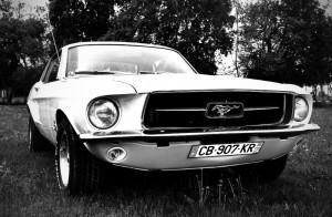 Mustang face