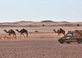 Deux Manceaux aux commandes du Renault Raid Maroc Historique
